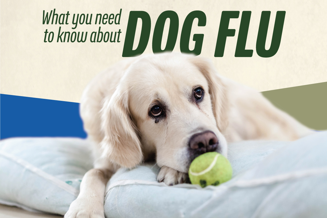 Canine Flu Day is June 20th