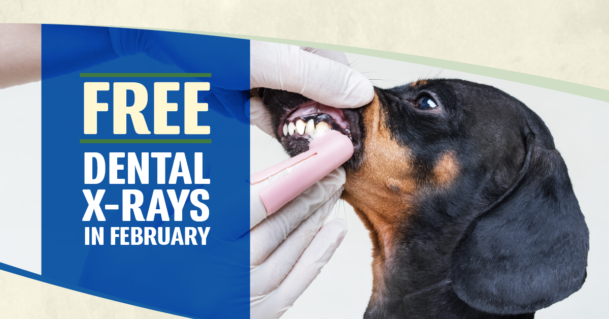 How to Be Proactive With Your Pet's Dental Health