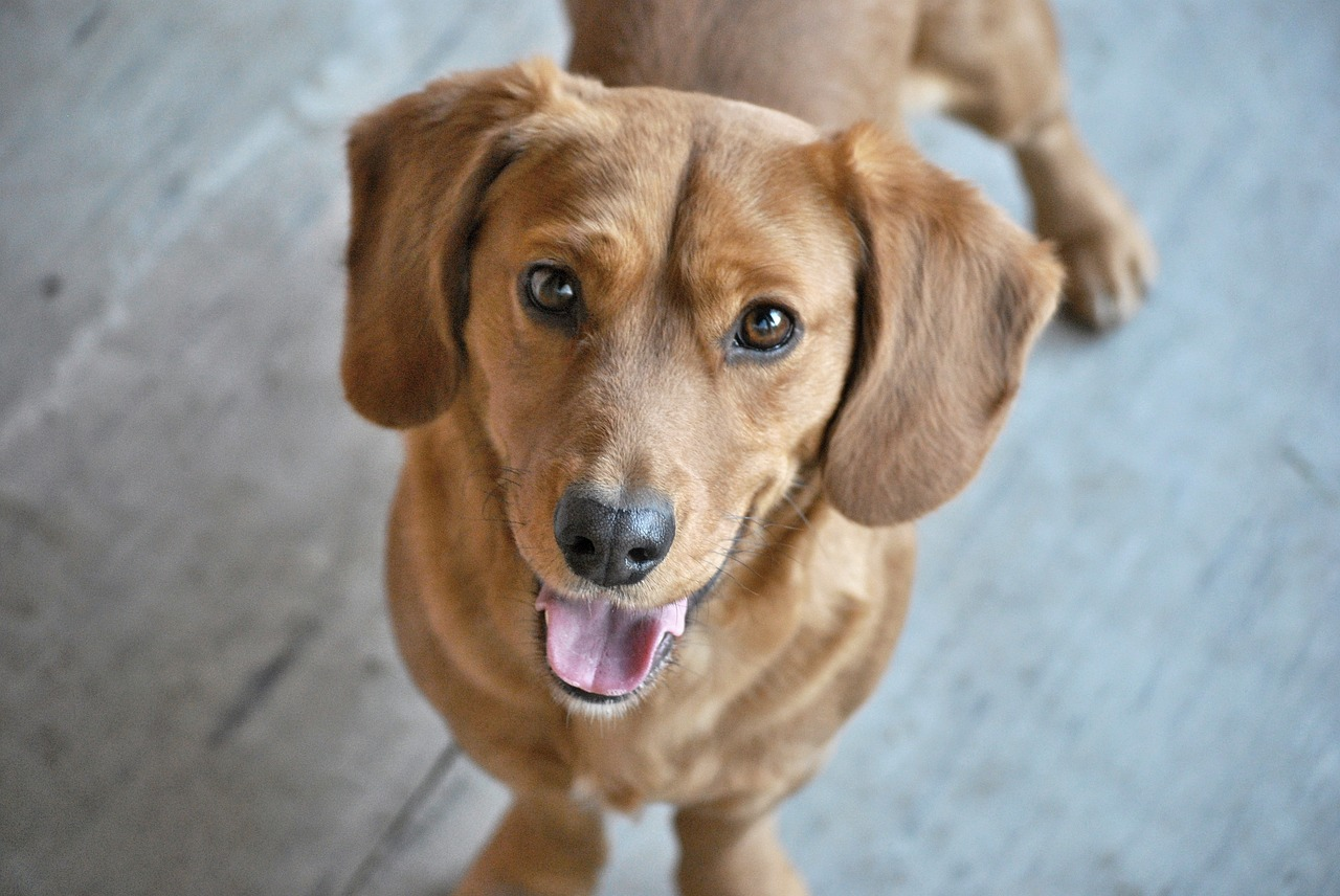 AAHA Accreditation: Giving Your Pet the Best