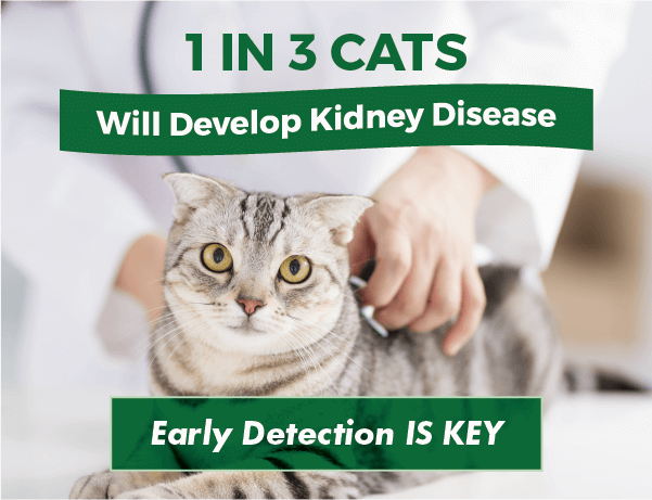 1 in 3 Cats Will Develop Kidney Disease