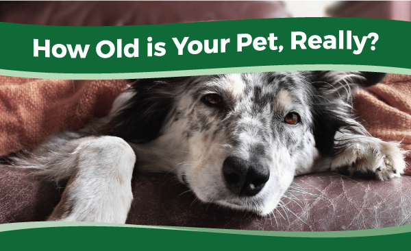 How Old is Your Pet Really?