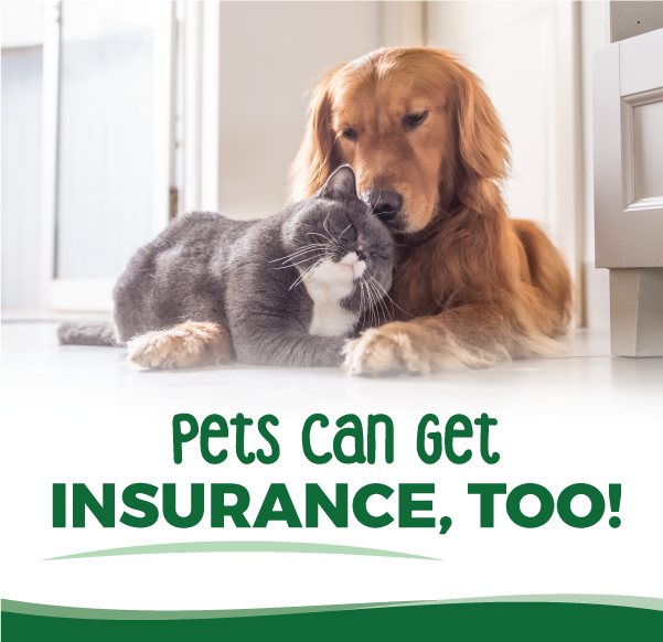 Pet Insurance Options