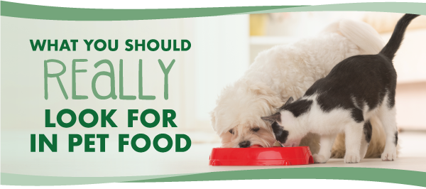 What You Should Really Look for in Pet Food