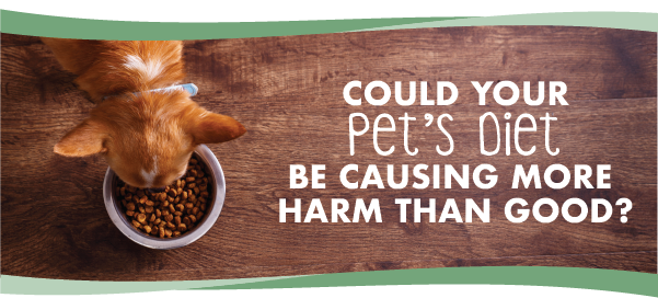 Is Your Pet's Food Doing More Harm Than Good?