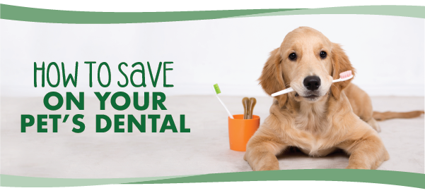 Save On Your Pet's Dental Care All Year Long