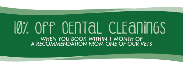 Save 10% On Your Pet's Dental Cleaning - Garden Oaks Veterinary Clinic