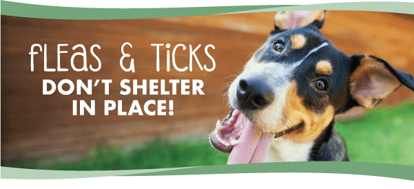 FLEAS AND TICKS DON'T SHELTER IN PLACE!