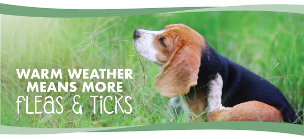 Warm Weather Means More Fleas and Ticks!